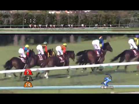 シップVSジャッカル 阪神大賞典で菊花賞馬対決